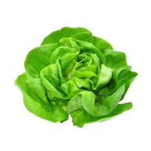 Load image into Gallery viewer, Butterhead Lettuce