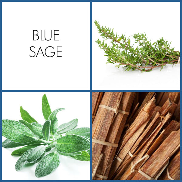 Blue Sage | Noteology