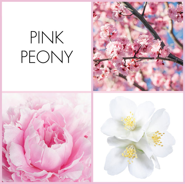 Pink Peony Sample | Noteology