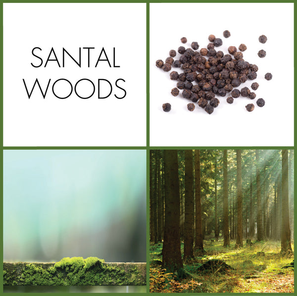 Santal Woods Eau de Parfum | Noteology