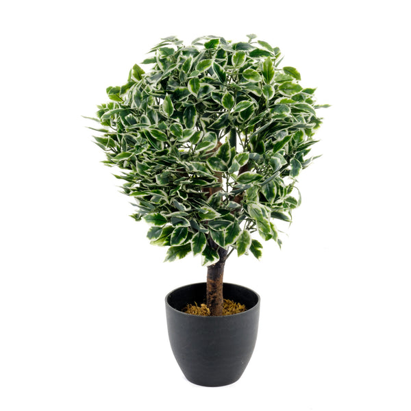 Artificial Medium 65cm Variegated Ficus Ball + Pot