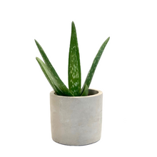 Load image into Gallery viewer, Baby Aloe Vera & Pot