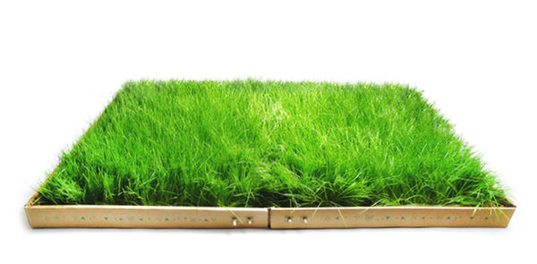 UNLEASH THE GRASS - The Blow-up version (L)