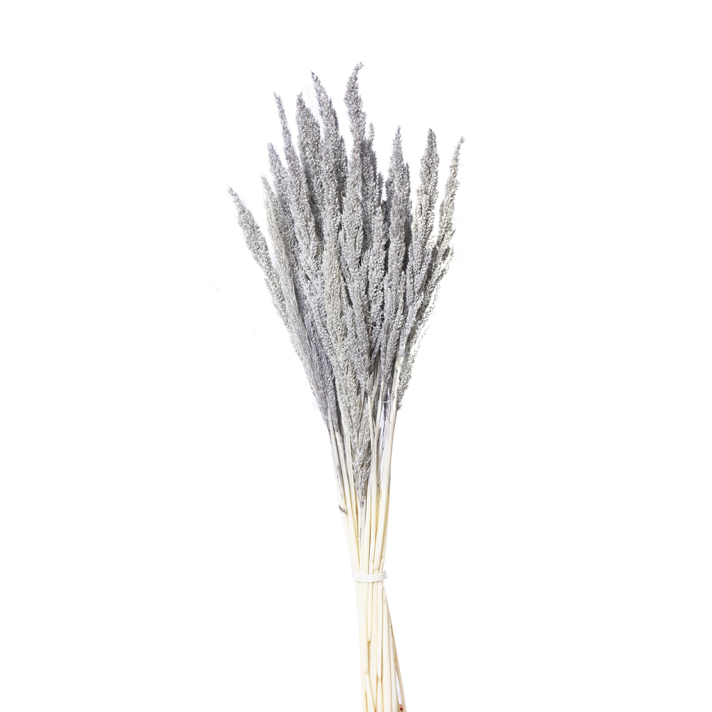 Dried Pinion Grass - Lempi Lifestyle csp-variant-img