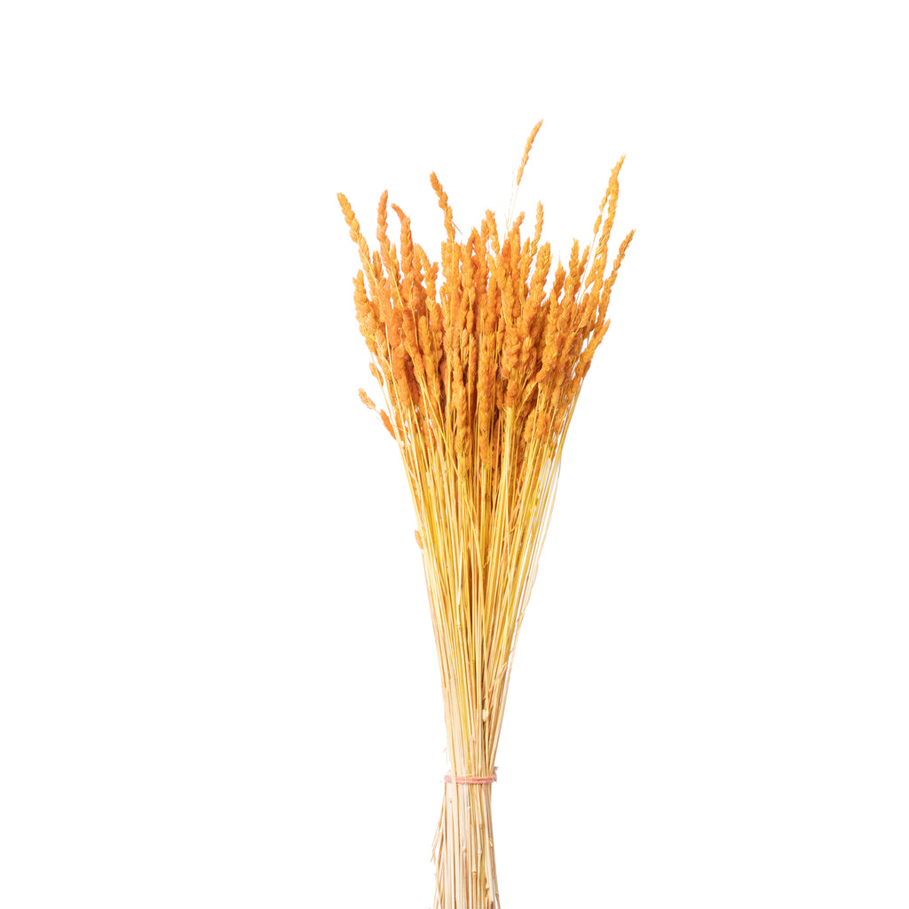 Dried Tansy Grass - Lempi Lifestyle csp-variant-img
