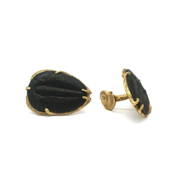 500 million year old Trilobite fossils set as cuff links with gold impressions of fossil ammonites