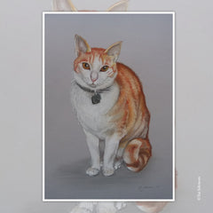 Cat Pencil Drawing New Zealand Artist Commission