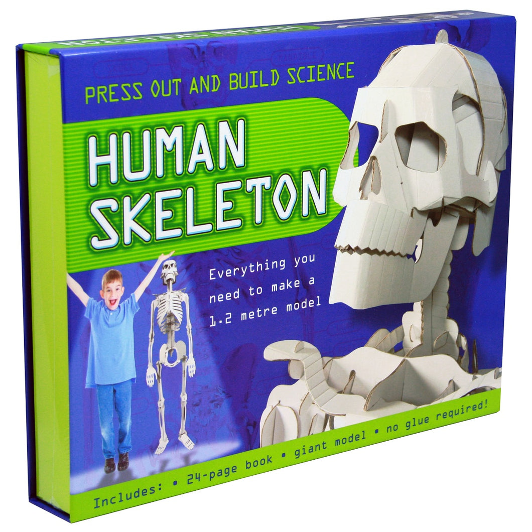 Press Out And Build – Human Skeleton