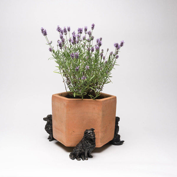 Border Collie Planter Accessories Potty Feet