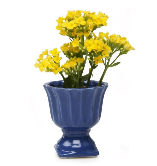 Brilliant Decorative Pot - Blue Pots Chive