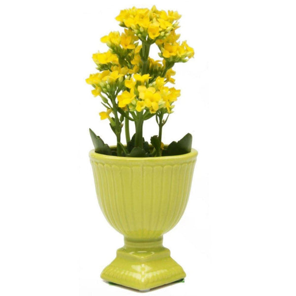 Brilliant Decorative Pot - Peridot Pots Chive