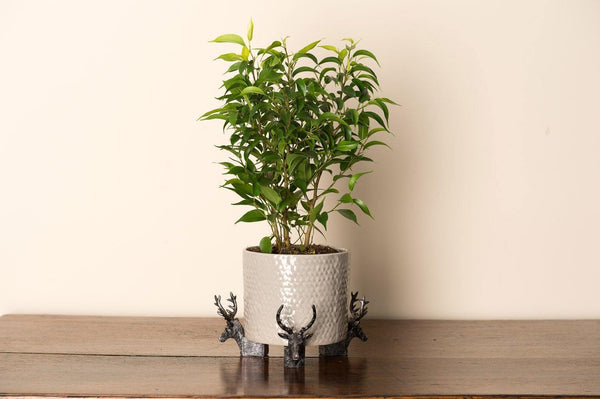 Brushed Silver Stag Planter Accessories Potty Feet