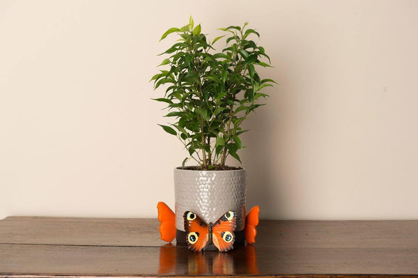 Peacock Butterfly Planter Accessories Potty Feet