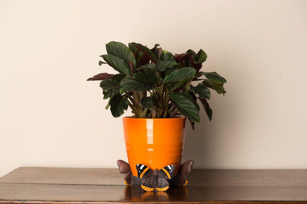 Red Admiral Butterfly Planter Accessories Potty Feet