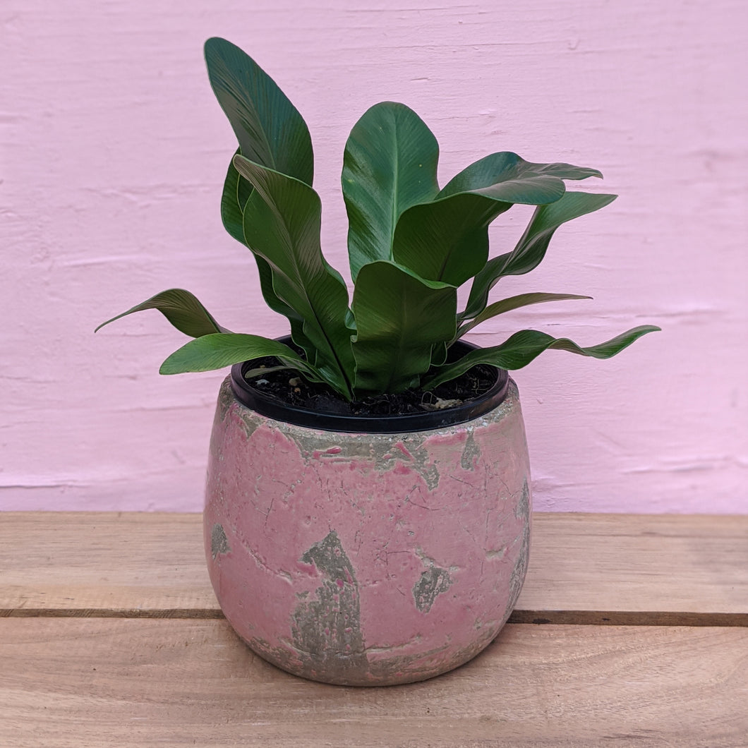 Pink rustic pot - small