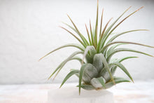 Load image into Gallery viewer, An Air Plant Holder Named After The Greek Goddess Selene
