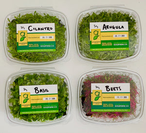 ARUGULA - CILANTRO - BASIL -  MICRO GREENS - LOCAL - VERTICALLY FARMED