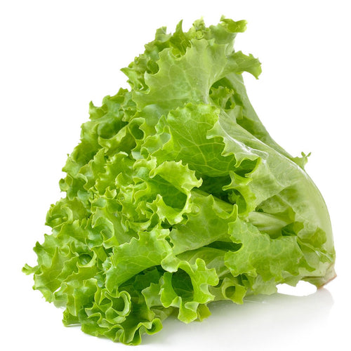 Green Leaf Lettuce - Mimi and Ry Produce