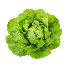 Boston Lettuce - Bibb, Butter - Mimi and Ry Produce