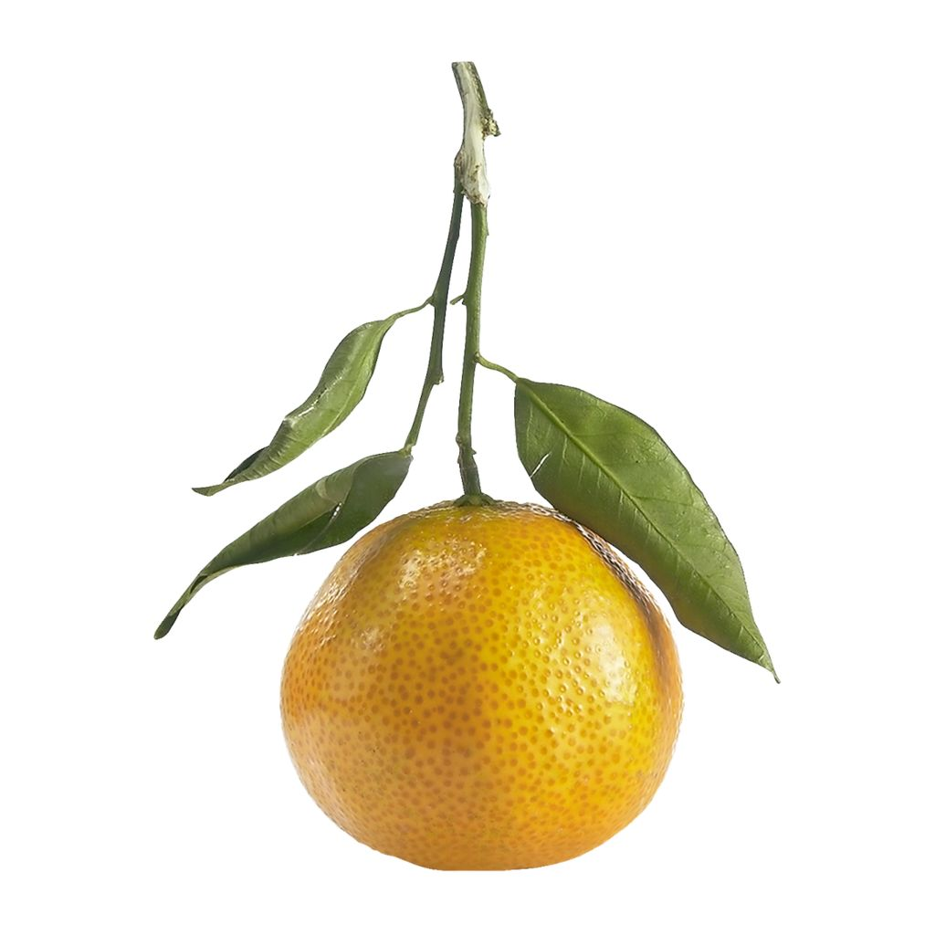 Clementines - Stem and Leaf - 5 count ~ 1.5 LB - Mimi and Ry Produce