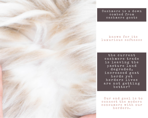 Cashmere facts