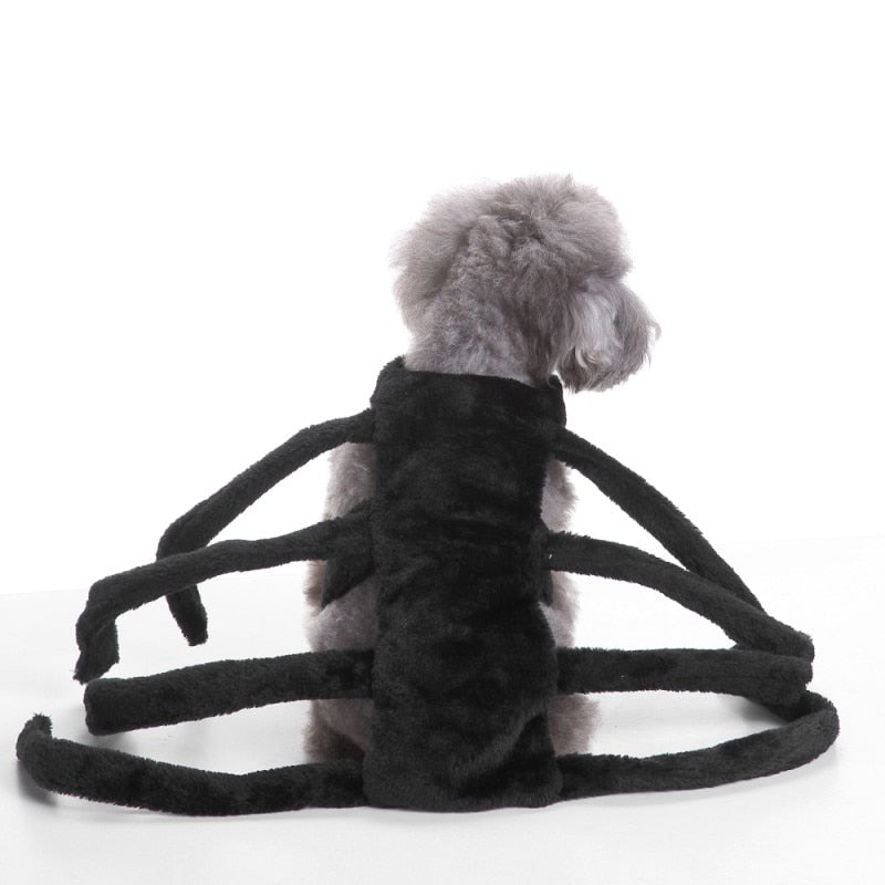 Pet Halloween Funny Spider Size S-L