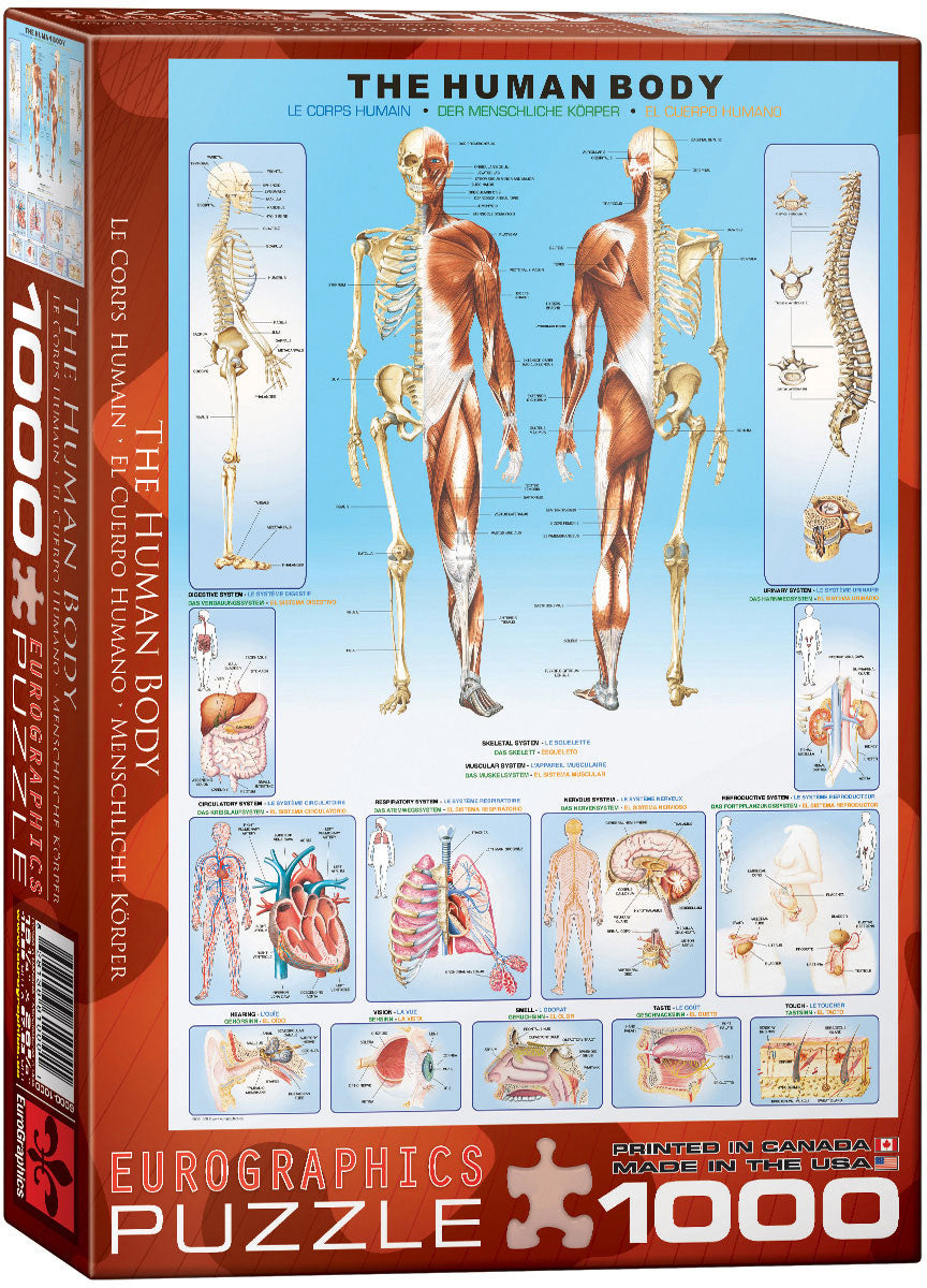 EuroGraphics The Human Body 1000 pcs Puzzle