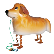 Golden Retriever, Walking Balloon