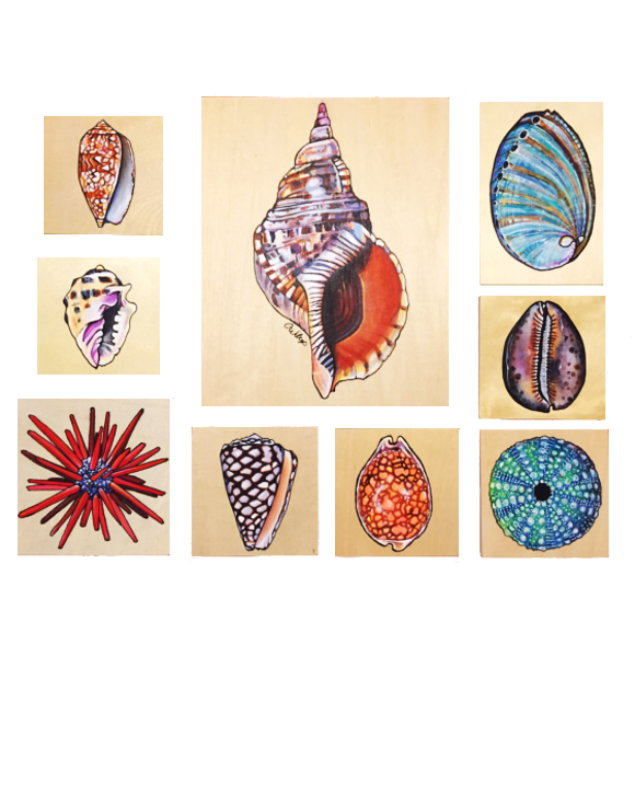 Assorted Shells set of 9(Original)