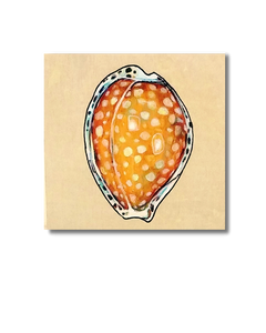 Gaskoins Cowry (Original)