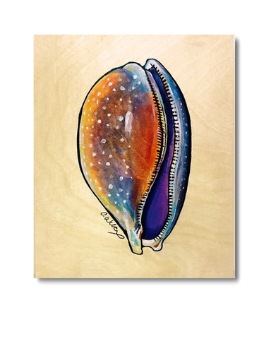 Atlantic Deer Cowry (Original)