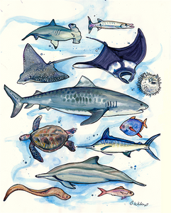 """Hawaiian Sea Creatures"" Sketchbook  Unmatted  Print"