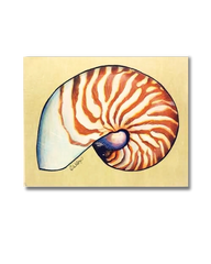 Nautilus Shell (Original)