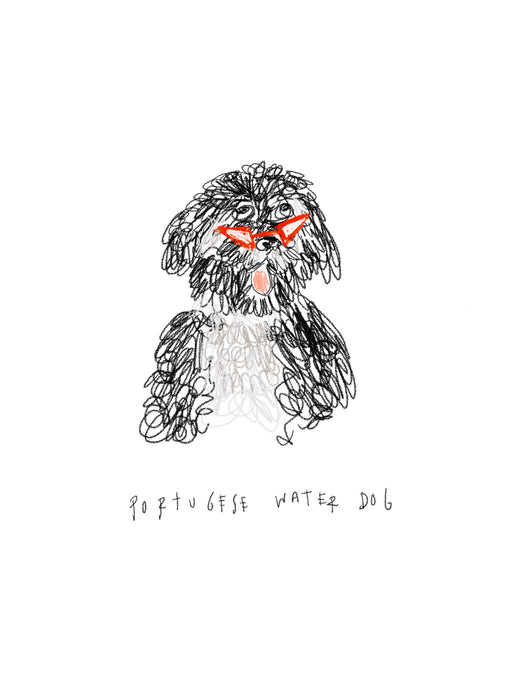 funky Portuguese Water Dog