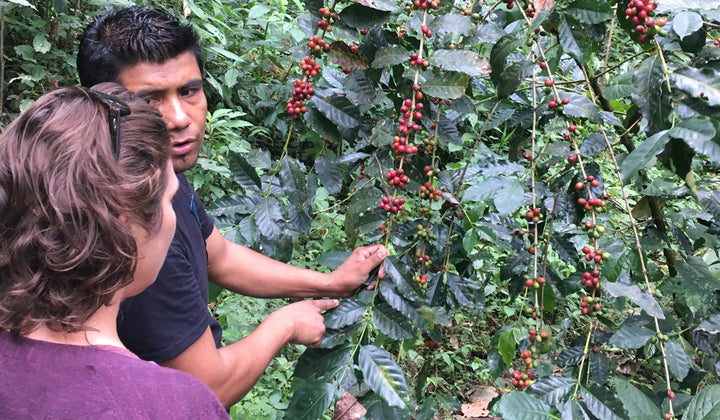 Getting Ethical About Coffee