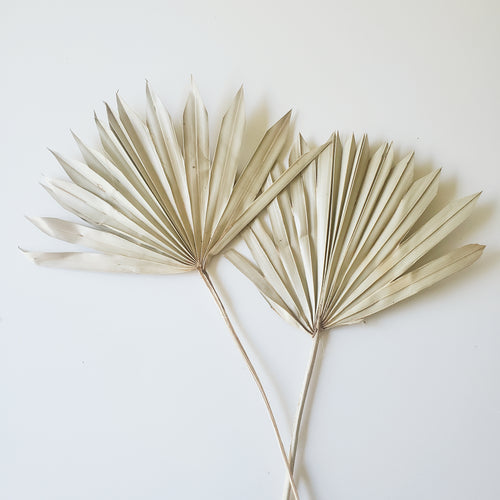 Dried Palm Leaves