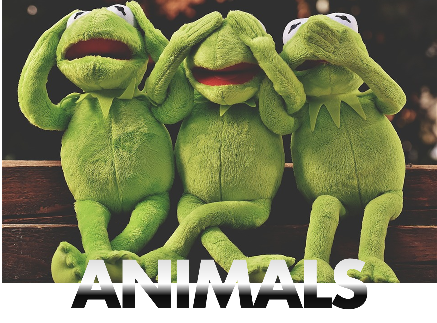 animal props hire