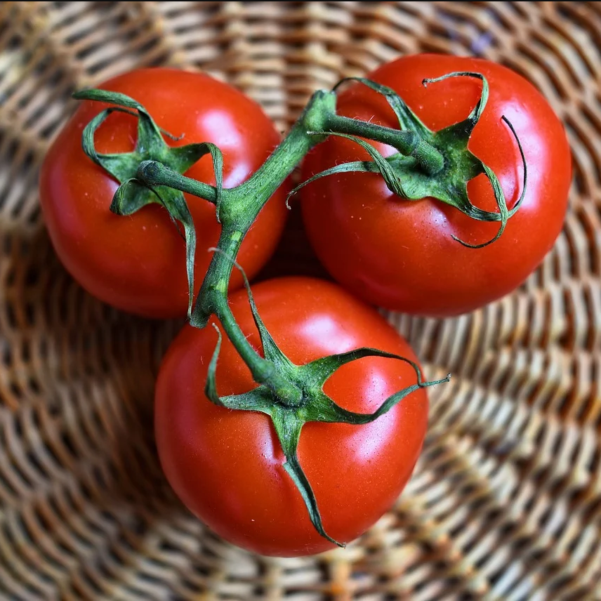 How to grow tomatoes better