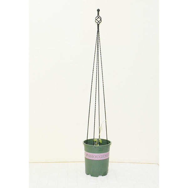Green Metal Plant Climbing Support