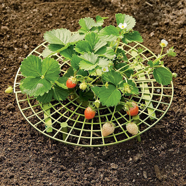 Strawberry Plant Support 11.8*11.8in Green