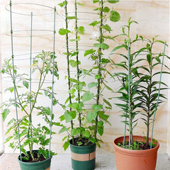 Garden Trellis for Potted Climbing Plants Support, 3 Sets