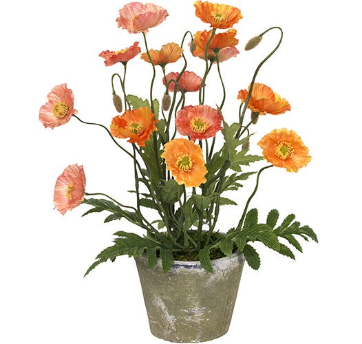 Diane James Poppies in Antique  Clay Jar