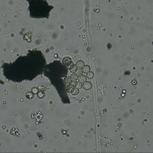 Load image into Gallery viewer, Sample - SymSoil® FIB (Fungal Infused Biochar) 1 cup