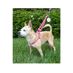 Step-In Harness with leash