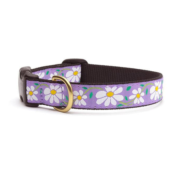 Daisy Dog Collar & Matching Lead Available