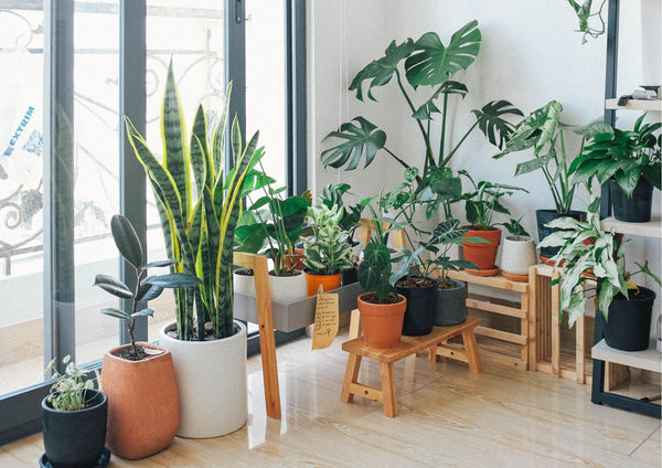 5 Benefits of Indoor Plants
