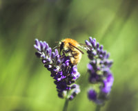 What to plant in your garden to help save the bees