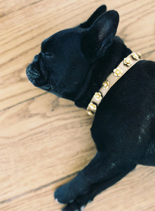 Floral Stud Collar-dog-collars-Hushed Commotion