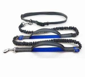 best hands free dog leash for hiking