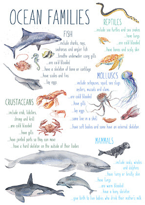 Ocean Families - Educational Card - Learning by Playing Materials